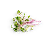 Heap of radish micro greens on white background. Healthy eating concept of fresh garden produce organically grown as a. Symbol of health and vitamins from Stock Photo