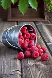 Heap of raspberry in bucket Stock Photography