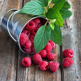 Heap of raspberry in bucket. Fresh raspberries on  old wooden table Stock Photography