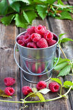 Heap of raspberry in bucket. Fresh raspberries on wooden table Stock Photography