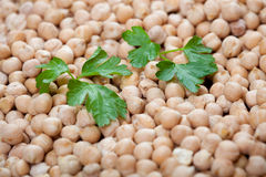 Heap of raw chick peas with fresh parsley Stock Photo