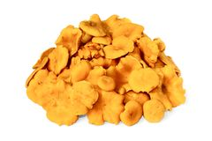 A heap of raw edible chanterelles on white Royalty Free Stock Photography