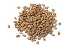 Heap of raw Farro grains Royalty Free Stock Image