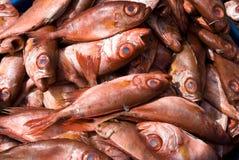 Heap of read fish. Texture Royalty Free Stock Photo