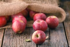 Heap of red apples in burlap bag Royalty Free Stock Photos