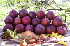Heap with red apples on table in the garden Stock Image