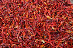 Heap of red chilly peppers Royalty Free Stock Photography