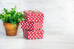 A heap of red dotted gift boxes and a green flower in a rustic ceramic pot. White wooden background, copy space. Royalty Free Stock Images