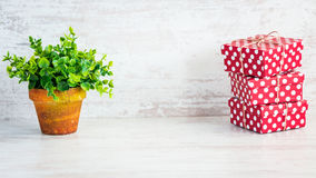 A heap of red dotted gift boxes and a green flower in a rustic ceramic pot. White wooden background, copy space. Stock Image