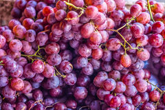 Heap of red grapes Stock Images