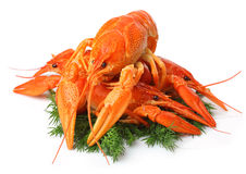 Heap of red lobsters with dill garnish isolated on white Stock Photo