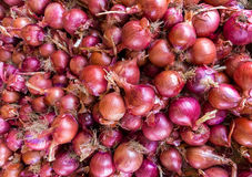 Heap of red onions on market Stock Photography