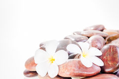 A heap of red river zen stones with white flowers Stock Photography