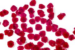 Heap of Red Rose Petals isolated on white background.  royalty free stock images