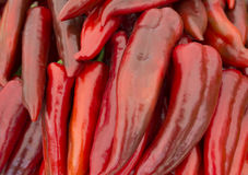 Heap of ripe big red peppers at a street market. A large number of red peppers in a pile. A special variety of red peppers royalty free stock image