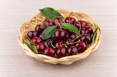Heap of ripe cherries with leaves in wicker basket. On table Stock Images