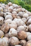 Heap of ripe coconut Stock Images