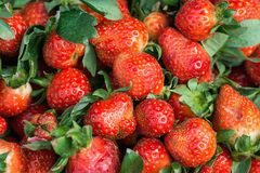 Heap of Ripe Freshly Picked Organic Strawberries with Green Leaves at Farmers Market. Vibrant Colors. Summer Harvest Stock Image