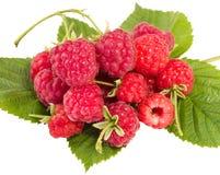 Heap of ripe raspberries Stock Images