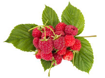 Heap of ripe raspberries Royalty Free Stock Photography