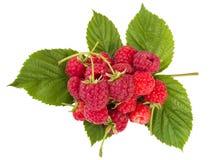 Heap of ripe raspberries Royalty Free Stock Photography