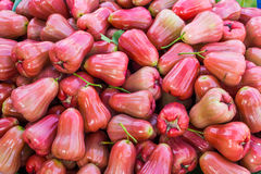 Heap of ripe rose apple for sale in Thailand market Stock Images