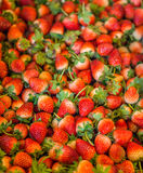 Heap of ripe strawberries (Fragaria x ananassa) harvested Stock Images