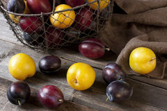 Heap of Ripe Sweet colorful Plums Stock Photos