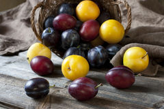 Heap of Ripe Sweet colorful Plums. Some plums in a basket on  wooden surface Royalty Free Stock Images
