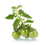 Heap of ripe tomatoes vegetable with green leafs Stock Images