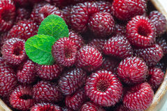 Heap of ripe wild raspberry in a wooden bowl and on table, horizontal, closeup Stock Images