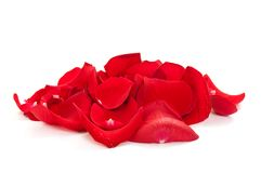 Heap of rose petals Royalty Free Stock Photography