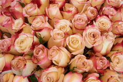 Heap of roses Royalty Free Stock Image