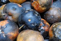 Heap of Rotting Apples. Of Various Forms Background Stock Photography