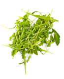 Heap of ruccola leaves Royalty Free Stock Photos