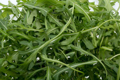 Heap of ruccola leaves Stock Image