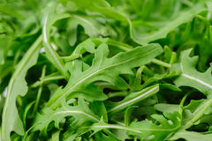 Heap of ruccola Royalty Free Stock Photo