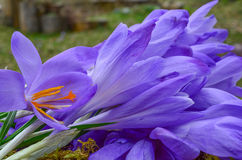 Heap of Saffron Stock Photography