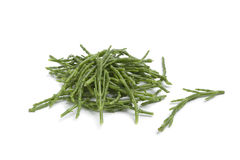 Heap of Salicornia stalks Stock Image