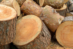 Heap of sawn pine logs Royalty Free Stock Images