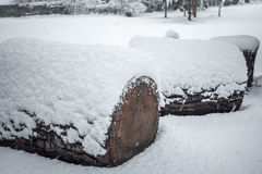 Heap of sawn pine wood logs covered with snow Royalty Free Stock Image