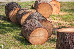 Heap of sawn pine wood logs with rough pine bark closeup view Royalty Free Stock Photos