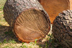 Heap of sawn pine wood logs with rough pine bark closeup view Stock Photography