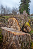 Heap of sawn wood logs with rough bark closeup view Stock Image