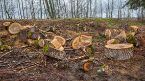 Heap of sawn wood logs with rough bark closeup view Royalty Free Stock Photos