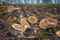 Heap of sawn wood logs with rough bark closeup view Royalty Free Stock Photo