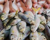 Heap of sea fish Stock Image