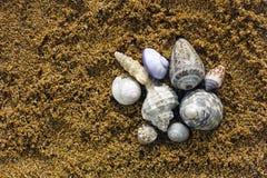 Heap of seashell on sand Stock Photo