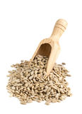 Heap of shelled sunflower seeds in wooden scoop Royalty Free Stock Image