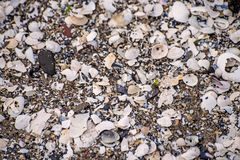 Heap of shells Stock Images